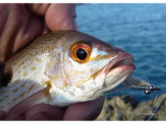 Costa Rica Pazific Fliegenfischen