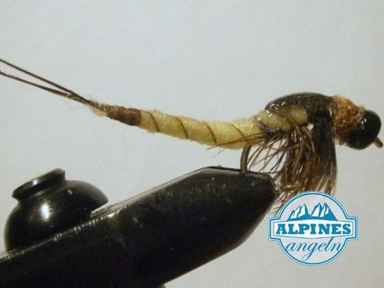 Exentended Body Nymphe Danica/Vulgata