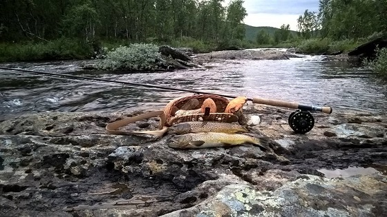 Lappland-Öring