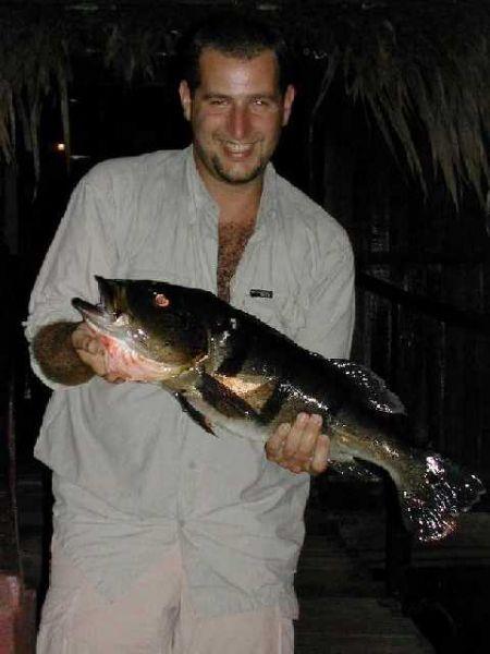 Buntbarsch aus dem Amazonas!