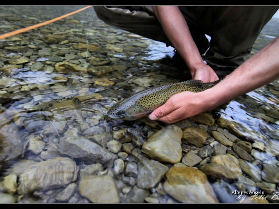 big_trout_pic_07