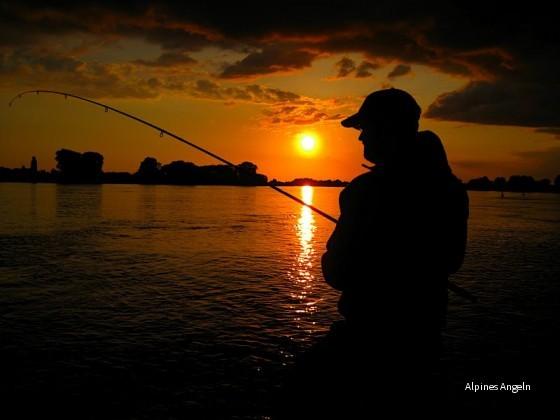 Zandern im Sonnenuntergang