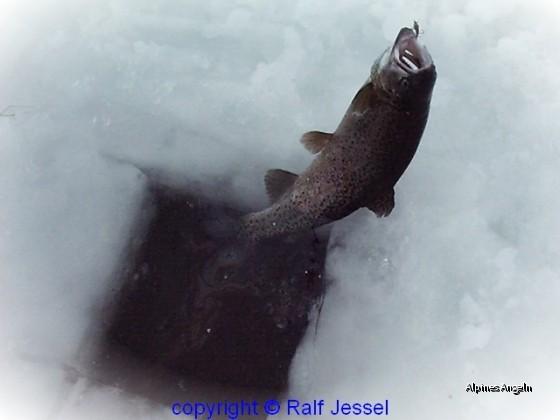 Eisfliegenfischen