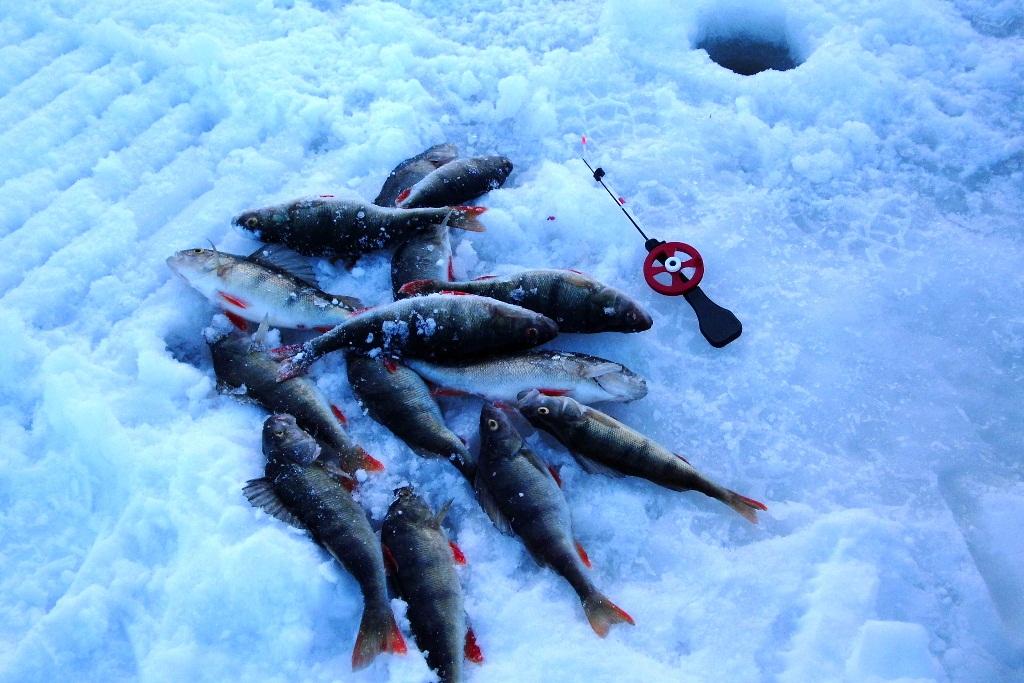 Eisfischen in Västerbotten