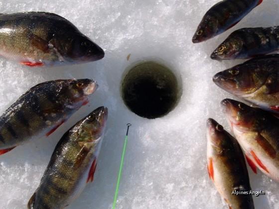 Noch passen sie durchs Eisloch (Nydalasjön)